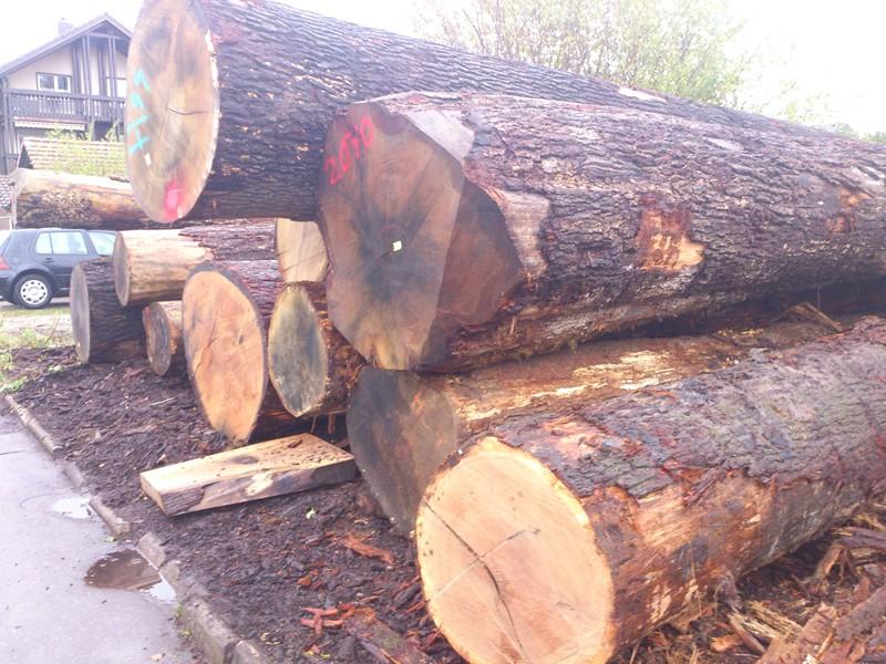 madera bimbo